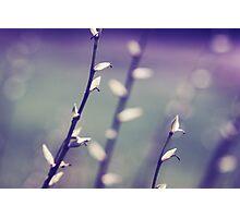 pureté_36 Photographic Print