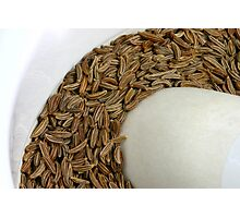 Fennel's Seed Photographic Print