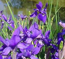 Purple at its Best by Liz Wear