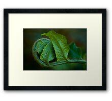 Untitled.00137 Framed Print