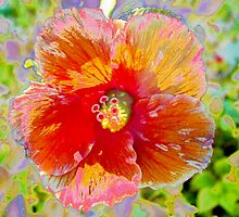 Rosy peach hibiscus by ♥⊱ B. Randi Bailey