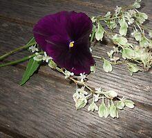 Purple pansies, colour! by purpleflowers