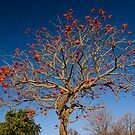 The Coral Tree by Carlton Grooms