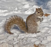 Squirrel in Snow 2 by dubya13