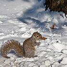 Squirrel in Snow 3 by dubya13