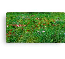 #572   Poppies & Wild Flowers Canvas Print