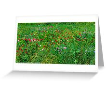 #572   Poppies & Wild Flowers Greeting Card