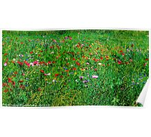 #572   Poppies & Wild Flowers Poster