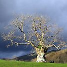 Ancient Tree by mikebov