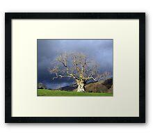 Ancient Tree Framed Print