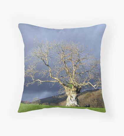 Ancient Tree Throw Pillow