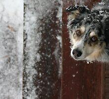 Winter's Curiosity by Aimee Stewart