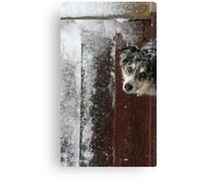 Winter's Curiosity Canvas Print