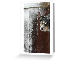 Winter's Curiosity Greeting Card