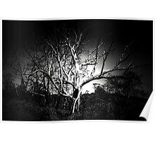 Hallow Tree Poster