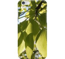 leaves, tree, spring , sunny, green, nature , branches iPhone Case/Skin