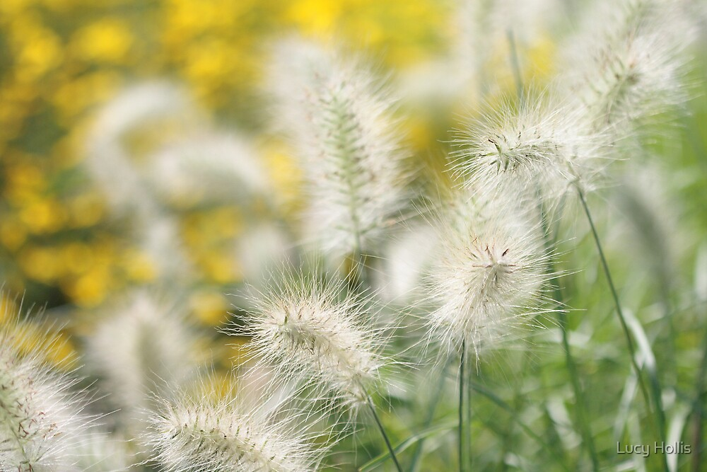 Grasses by Lucy Hollis
