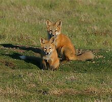 Baby Red Fox Twins by Rhonda R Clements