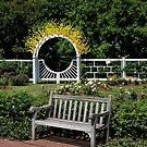 Garden Bench by Jim Caldwell
