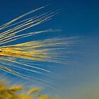 wheat by imaginaryfriend