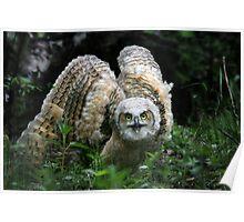 Owlet on instinct... Poster
