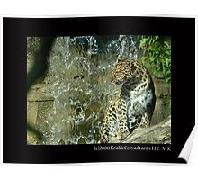 Leopard by Waterfall Poster