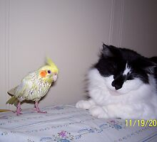 Tweety bird harassing Gwendolyn by Dottie Palmer