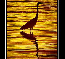 Silhouette by George  Link