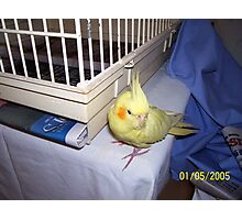 Tweety Bird on the loose Photographic Print