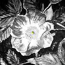 Flower by jomash