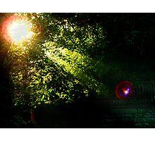 myRedBubble Photographic Print