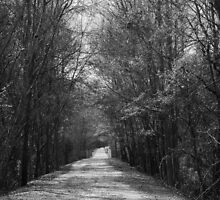 Palmetto Trail In Florence, SC by AlixCollins