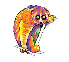 Slow loris by theroywood