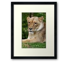 Content (or sizing you up for dinner) Framed Print