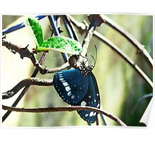 Majestic Butterfly Poster