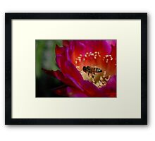 To Be a Bee Framed Print