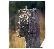 Abandoned Fencepost Poster
