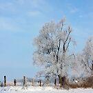Winter Contrast by AbigailJoy