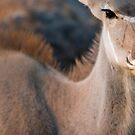Kudu close up by Wild at Heart Namibia