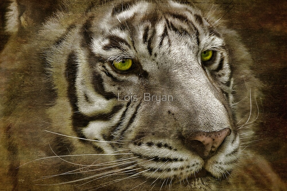 White Bengal by Lois  Bryan