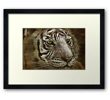 White Bengal Framed Print