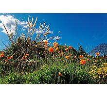 Celebrating Spring Photographic Print