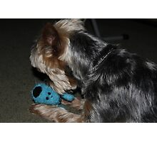 Blue Toy Puppy Photographic Print