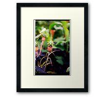 00370 Framed Print