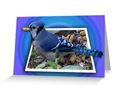 ¨¯`•.★BLUE JAY ENJOYING HIS SNACK OF PEANUTS¨¯`•.★ Greeting Card