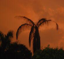 Laguna Sunset by shakey