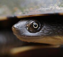 Long Neck Turtle by Steve Bullock