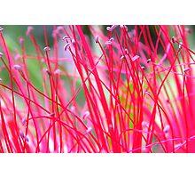 bottle brush Photographic Print