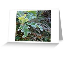 First Frost... Greeting Card