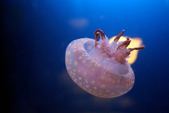 Little Jelly Fish by mjds